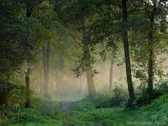 Šuma - Page 3 Suma_(1)